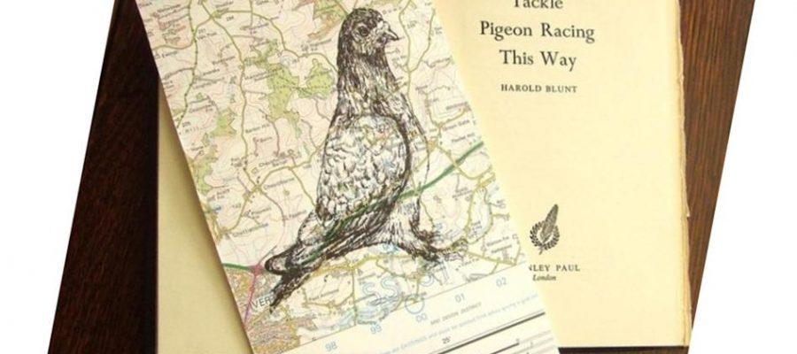 Любопитни факти за пощенските гълъби