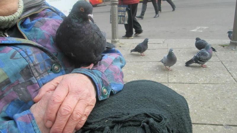 Жената която говори с гълъбите