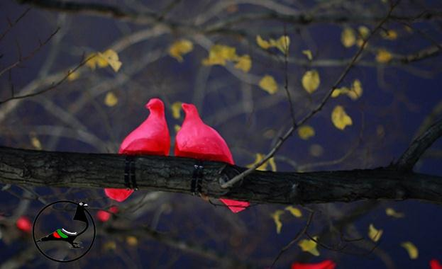 Многоцветни гълъби бродят из Копенхаген