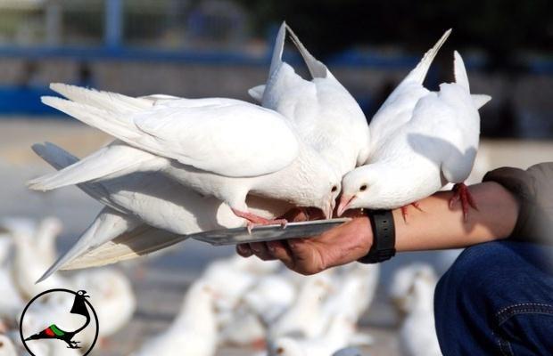 Американски художник превърна гълъби в контрабандисти