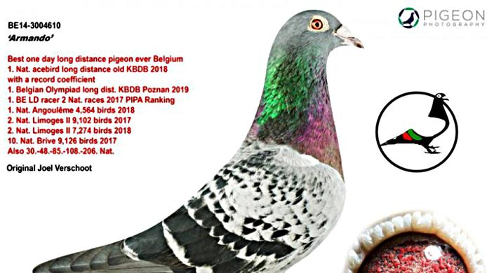 Броиха рекордните 1,25 млн. евро за пощенски гълъб