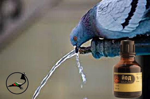 Профилактика на водата за пиене при гълъбите