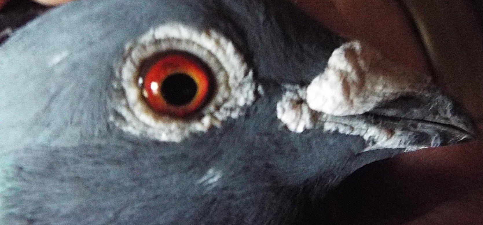 Единствената информационна агенция поддържаща гълъбарник в света е Българска